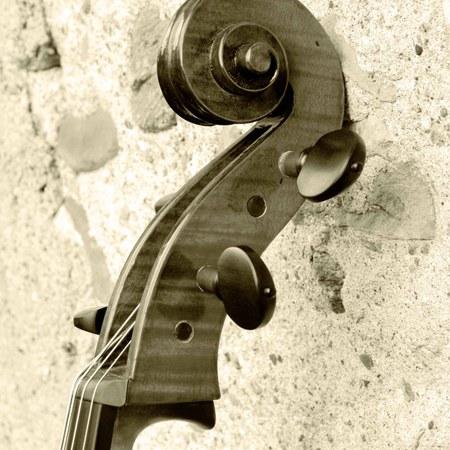 Schnecke Detail
